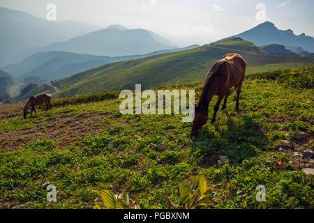 Grazing horses in the Caucasus mountains Sochi Russia Rosa Khutor, Krasnaya Glade - Stock Photo
