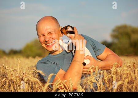 Man in wheat field, afternoon light, holding Jack Russell terrier puppy on hands, moving his head away, because dog is licking and chewing cheek and e - Stock Photo
