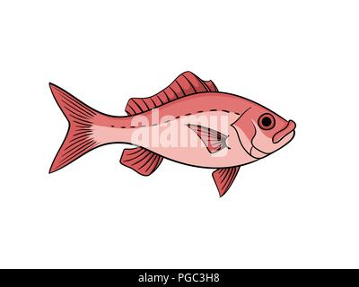 Red snapper fish illustration in vintage naturalistic style vector animal isolated on white - Stock Photo