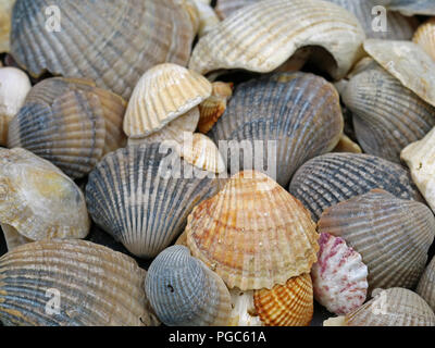 close up of different shellfish found on Mediterranean Sea - Stock Photo