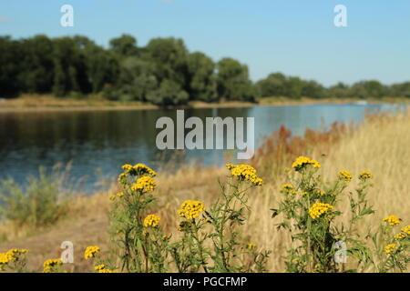 Elbe river in Magdeburg. - Stock Photo