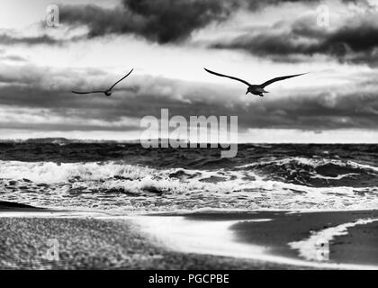 Flat beach with puddles of water, high contrasted sky, in the foreground 2 flying birds - picture in black and white - Location: Germany, Ruegen Islan - Stock Photo