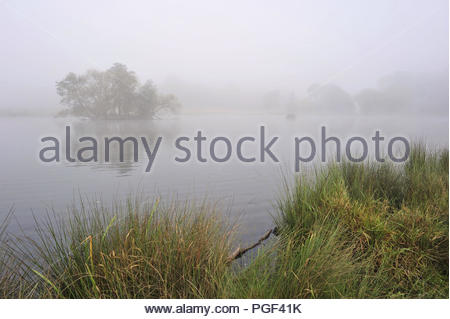 Fog forming over the lake in the morning, autumn in Richmond Park Surrey England UK. - Stock Photo