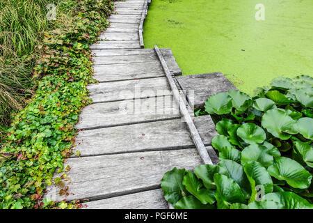 Wooden walkway around the garden pond, Duckweed covered pond - Stock Photo