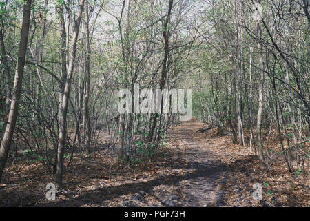 Pathway amidst Trees In Forest of UK - Stock Photo