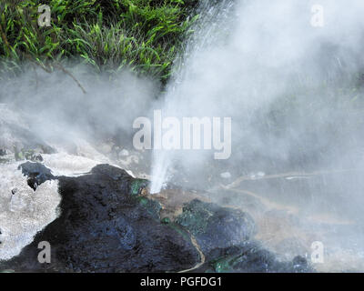 Water gushes from a hot spring , Birds Nest Terrace, Waimangu Volcanic Rift Valley, New Zealand. Algae and silica covered rock, surrounded by steam - Stock Photo