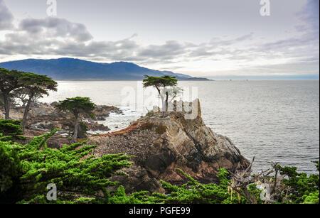 Pebble Beach, California: A lone cypress tree stands on the Californian coastline, 17 Mile Drive near Carmel. Rocky promontory, ocean background - Stock Photo
