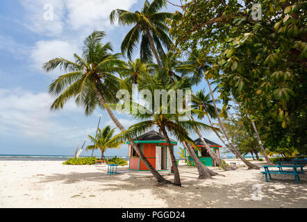 Idyllic tropical beach with white sand, palm trees and turquoise ocean water on Barbados island in Caribbean - Stock Photo
