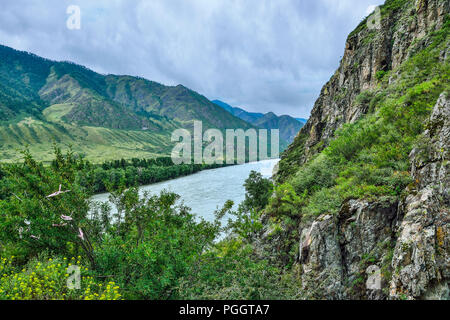 Picturesque summer landscape on rocky shores of rapid siberian river Katun, cliffs with moss and green grass covered, trees and yellow flowers at fore - Stock Photo