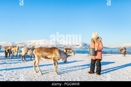 Little girl feeding reindeer on sunny winter day in Northern Norway - Stock Photo