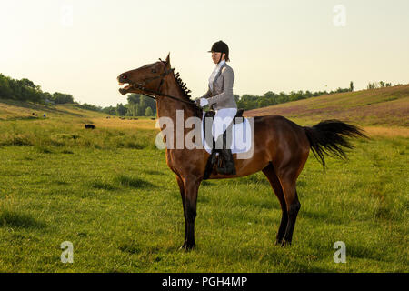 Young woman riding a horse on the green field. Horseback Riding. Competition. Hobby - Stock Photo