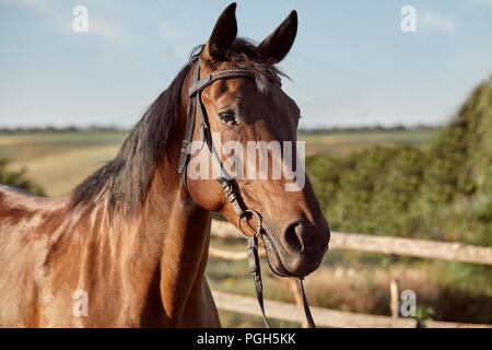 Beautiful brown horse, close-up of muzzle, cute look, mane, background of running field, corral, trees. Horses are wonderful animals - Stock Photo