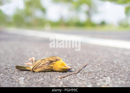 Dead bird on the asphalt road in country side - Stock Photo