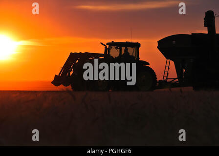 Grain cart working in an evening harvest field - Stock Photo