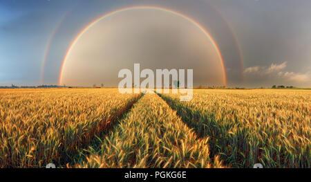 Rainbow over wheat field, panorama - Stock Photo