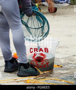 Crab Fishing at Aberaeron Harbour - Stock Photo