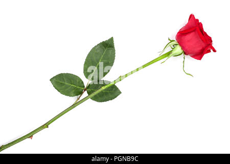 beautiful red rose isolated on white background. Top view. Flat lay pattern - Stock Photo