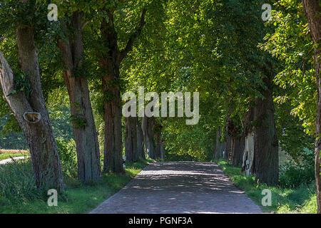 Alley with Chestnut trees (Castanea), Mecklenburg-Western Pomerania, Germany - Stock Photo