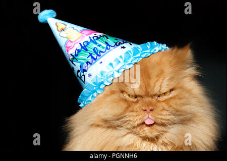 Orange Persian cat wearing birthday party hat,Istanbul - Stock Photo
