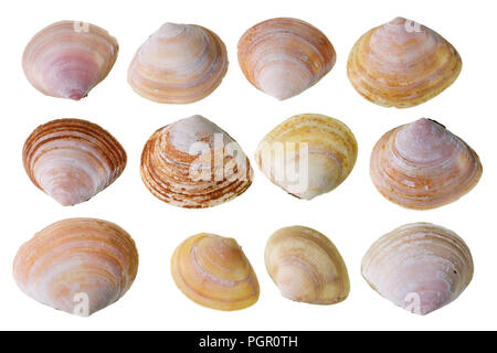 Halves of pink small cockleshells that live in the Baltic Sea. Isolated on white studio macro set - Stock Photo