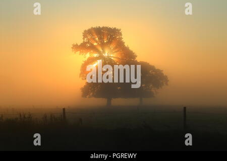 Rays of sunlight shining through tree on a misty morning in Axe Valley in East Devon - Stock Photo