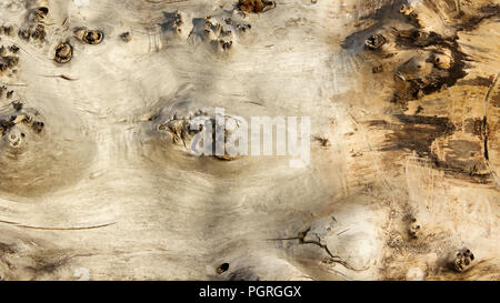 Top view of old log. Macro. Tree trunk without bark. Texture of timber.  Natural background - Stock Photo