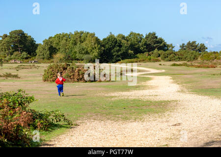 Toddler walking away from camera exploring off the track on New forest National park on sunny summers day. - Stock Photo