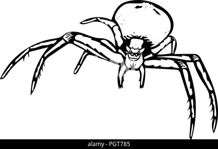 Black and white vector art of a Crab spider head-on. - Stock Photo