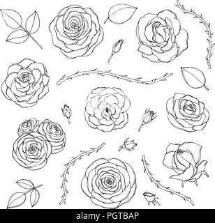 Vector hand drawn set of rose flowers with buds, leaves and thorny stems line art isolated on the white background. Floral collection of blossoms in s - Stock Photo