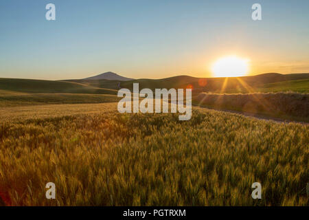 Sun setting over wheat field in the Palouse region of Washington - Stock Photo