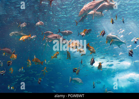 Lisbon, Portugal - March 3, 2014: Colorful tropical fishes of the Lisbon Oceanarium during nourishment - Stock Photo
