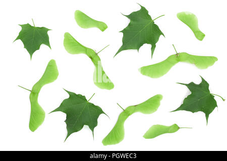 Green maple seeds with leaves isolated on white background - Stock Photo