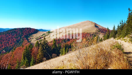Panorama of mount Parashka and a mountain range covered in red, orange and yellow deciduous forest and green pine trees under blue cloudless sky on a  - Stock Photo