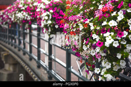 pink and white flowers in flower boxes on a bridge. Photographed in Amsterdam in August - Stock Photo