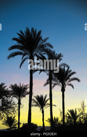 Palm tree silhouettes against the sky during African sunset. Colorful exotic summer card. Travel, vacations concept. - Stock Photo