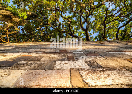 Lime  stone retaining wall and live oak at Savannah Georgia. - Stock Photo