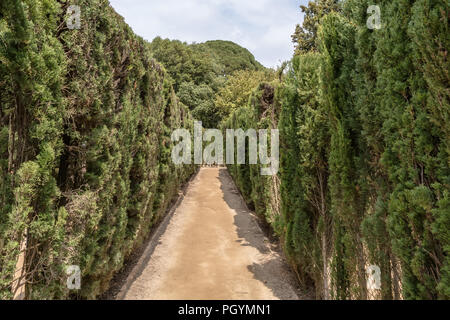 Path through trimmed cypress trees of hedge maze in Labyrinth Park of Horta. The maze has a trapezoidal shape similar to Minotaur labyrinth. - Stock Photo