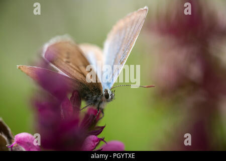 Insects Arbey Lanna - Stock Photo