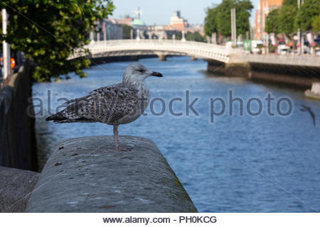 Warm weather in Dublin this morning as the shops open. The forecast is for temperatures of 17 degrees and mixed periods of sun and showers. - Stock Photo