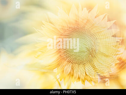 awesome sunflower II - Stock Photo