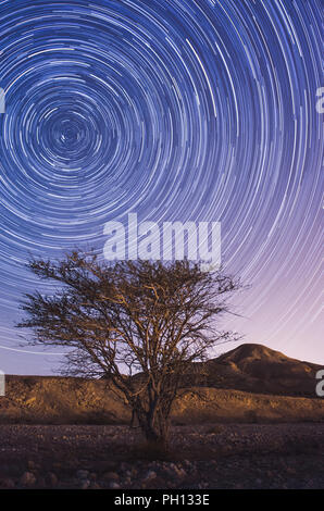 lonely tree in the desert of israel at night with long exposure startrails - Stock Photo