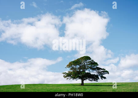 Single tree on green grass against blue sky and clouds - Stock Photo