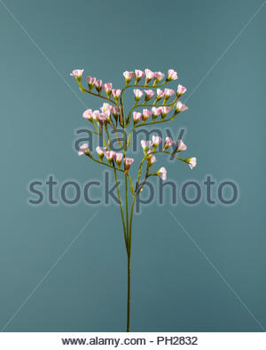 Pink flowers on twig - Stock Photo