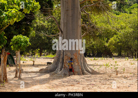 ROAD TO BISSAU, GUINEA B. - MAY 1, 2017: Unidentified local little boy stands near the tree trunk in a village in Guinea Bissau. Still many people in  - Stock Photo
