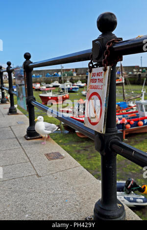 A seagull stands by a notice banning the feeding of such birds in Mevagissey Harbour, Cornwall, UK. - Stock Photo