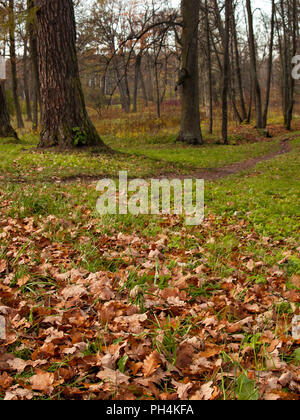 On a green glade grow large trees and lie near the pathway fallen leaves during the fall from the trees yellow and red leaves in the autumn in the par - Stock Photo