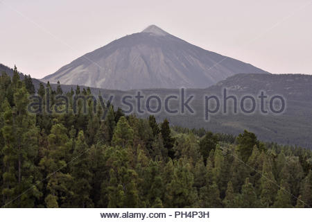 Mount Teide (Pico del Teide ) - 3718 m high volcano at dawn and pine trees of Corona Forestal Natural Park. La Orotava Tenerife Canary Islands Spain. - Stock Photo