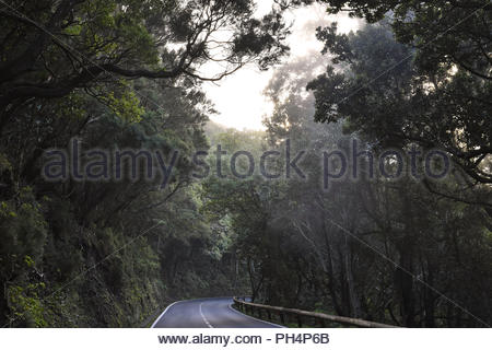 TF-12 road through dense forest with laurel trees. Mist forming in Anaga mountains near Las Mercedes, northeast of Tenerife Canary Islands Spain. - Stock Photo