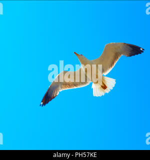 Flying sea gull against the blue sky - Stock Photo