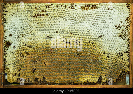Natural background of honeycomb with golden honey, wax structures in wooden frame close-up, texture - Stock Photo